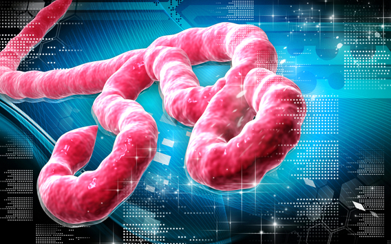 science vs the ebola virus essay Ebola and other diseases references biggerstaff et al, estimates of the reproduction number for seasonal, pandemic, and zoonotic influenza: a systematic review of the literature, bmc infectious diseases 2014, 14:480.